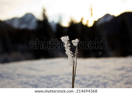 a frosty spring out of the wood, alps, italy - stock photo