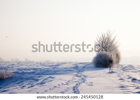 a frozen bush with a sign on a foggy winter landscape