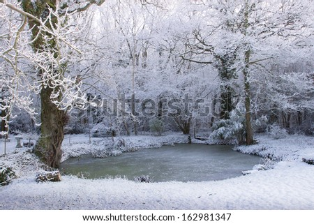 A frozen pond, on the edge of a wood, makes a beautiful Winter scene.