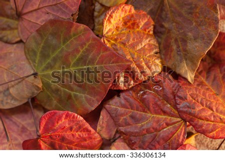 A full frame image of some brown and orange autumn leaves.  Some of the leaves are slightly wet. The image has a shallow depth of field and focus is on the middle leaf tip.