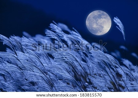 A full moon against night sky overlooking tall weeds. - stock photo