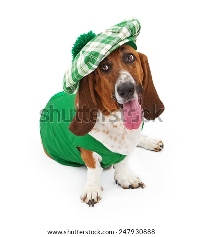 A funny Basset Hound dog dressed for St Patrick's Day with a green outfit and hat