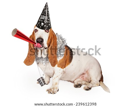 A funny Basset Hound dog wearing a Happy New Year's hat and party necklace while blowing on a red noisemaker - stock photo
