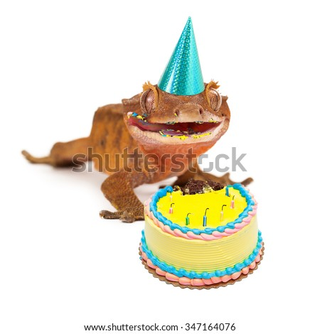 Funny Crested Gecko Wearing Birthday Party Stock Photo 347164076