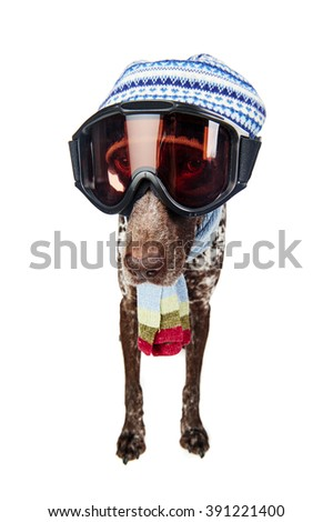 a funny dog wearing ski goggles, a scarf, and a hat - stock photo