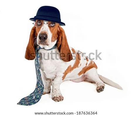 A funny image of a Basset Hound dog dressed as a businessman wearing glasses, a hat and necktie