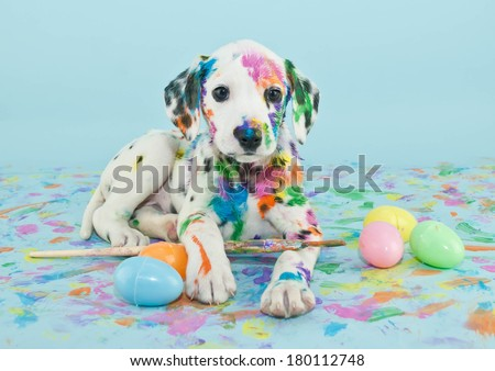A funny little Dalmatian puppy that looks like he just painted some Easter eggs. - stock photo
