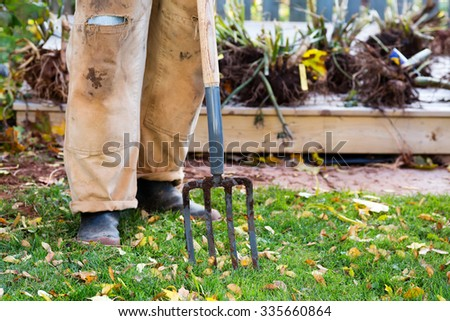 A garden fork used in digging dahlia tubers in the fall. - stock photo