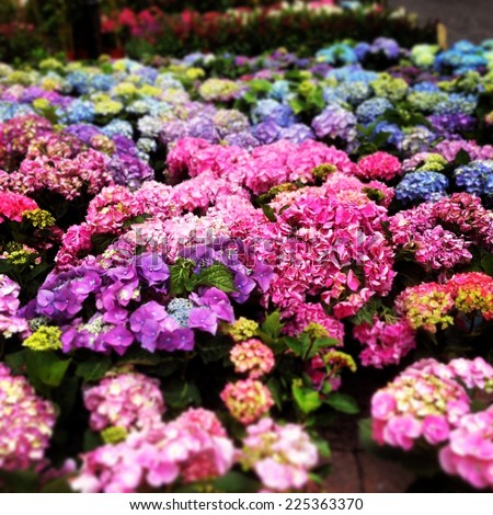 A garden of pink, purple and blue flowers in bloom. - stock photo