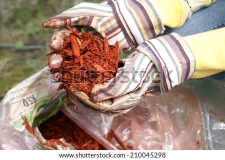 A gardener grabs a hand full of red mulch.