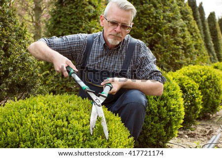 A gardener in overalls cuts a bush in the garden