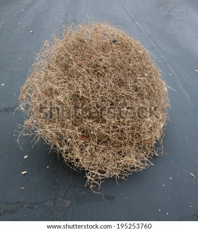 "A Genuine Tumble weed aka ""Salsola"" ""Saltwort or Russian thistle"" sits on a black top road. Tumble Weeds get their name from rolling across fields in the wind due to their round shape.  - stock photo"