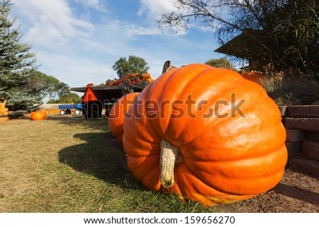 A giant pumpkin sits on the grass at a local produce farm. In the background is a farm wagon loaded with pumpkins and gourds. - stock photo