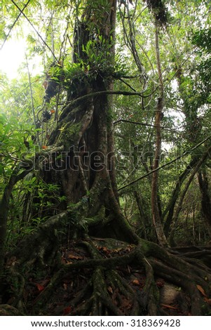 A giant tree trunk, national park, north-eastern Thailand