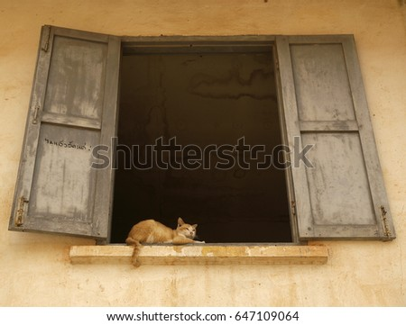 A ginger cat sits within a large window frame with shutters in an ochre-coloured temple in Vientiane, Laos