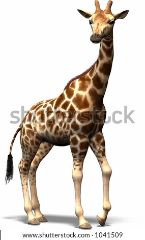 A Giraffe from the south