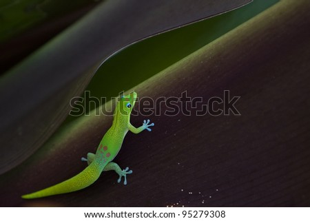A gold date gecko resting on leaf of tropical plant - stock photo