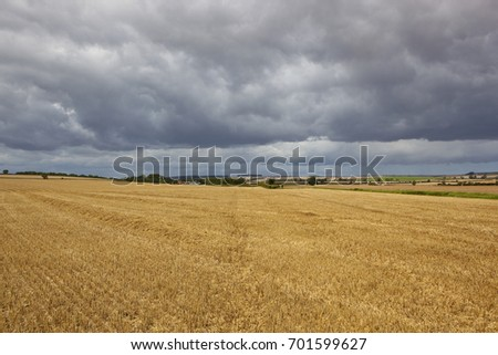 a golden harvested wheat field with inky blue storm clouds in summer in the yorkshire wolds