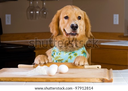 A golden retriever dog baking with eggs, flour and a rolling pin in a home kitchen. - stock photo
