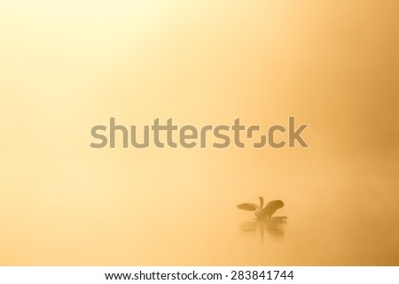 A golden sunrise over a lake with a warm glow and morning fog with two geese swimming in the water gracefully - stock photo