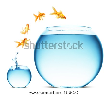 A goldfish jumping out of the water to escape to freedom. White background. - stock photo