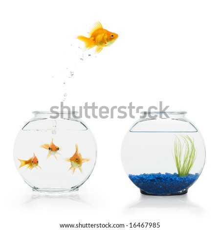 A goldfish leaping from a shared, bare fishbowl to a more decorative one. - stock photo