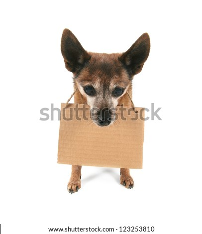 a goofy chihuahua holding a sign