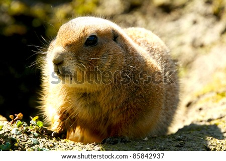 A gopher is watching his food