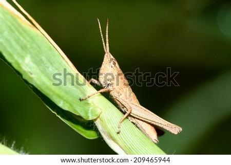 A grasshopper on leaf - stock photo