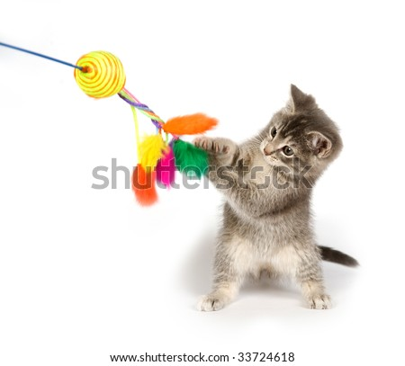 A gray kitten playing with a toy on a white background - stock photo