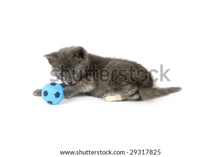 A gray kitten plays with a small toy soccer ball on a white background