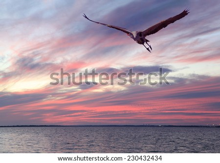 A Great Blue Heron Fies Over the Bay as the Sun Sets in Shades of Pink - stock photo