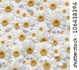 A great concept for a bunch of flowers on a white background, under the summer sunlight - stock photo