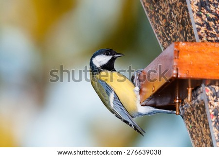 A great tit at a bird feeder with various seeds - stock photo