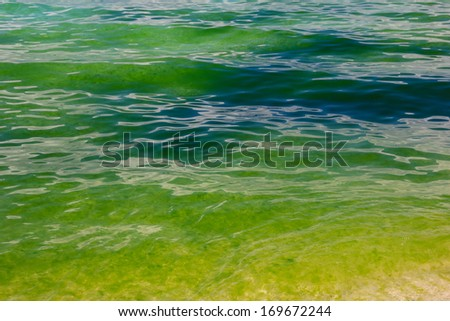 A green Algae bloom in the ocean - stock photo