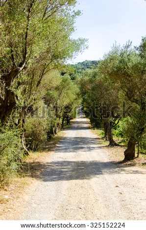 A green and dry path in France among the olive trees - stock photo