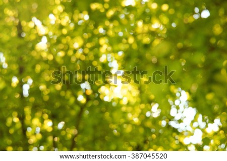 a  green  background of tree