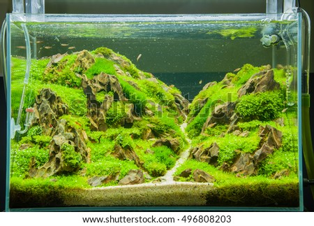 A green beautiful planted  aquarium with fishes