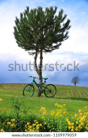 A green bicycle tied to a tree in a field in France.