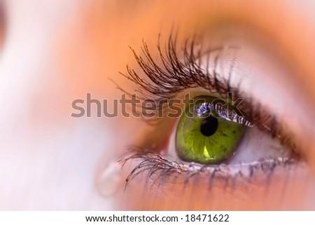 a green eye - stock photo