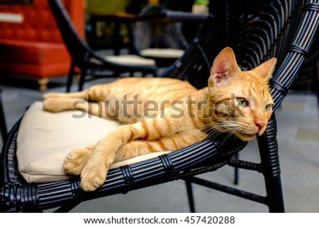 a green-eyed orange tabby cat resting on a black chair lazily stares into the distance