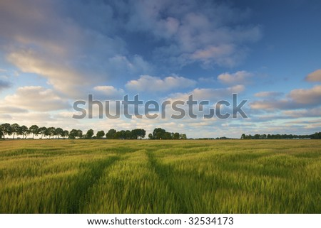 a green field of wheat in summer with a blue sky and clouds