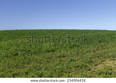 A green field with crops - stock photo