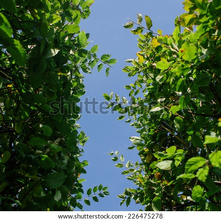 A green hedge and blue sky background. simple lines - stock photo