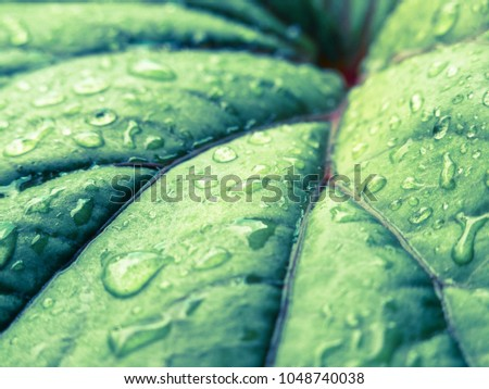 A green leaf with lines and droplets as a backdrop