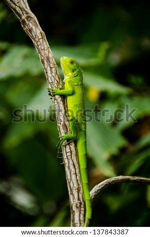 A green lizard sitting on a branch of a tree