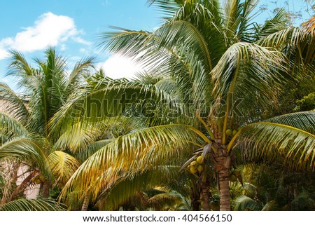 A green palm leaves over blue sky background