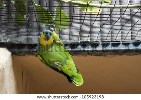 A green parrot hanging on one leg in his cage.