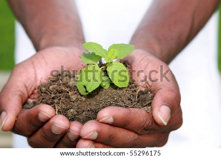 a green plant safe in the palms of a persons hands, represents earth friendly concepts