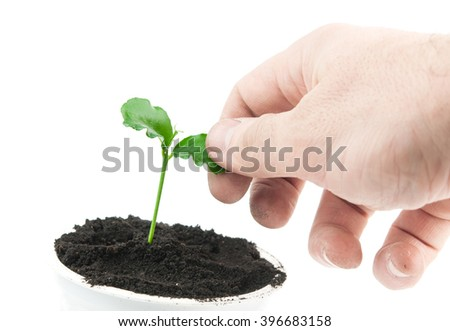 A Green seedling. A close up - stock photo